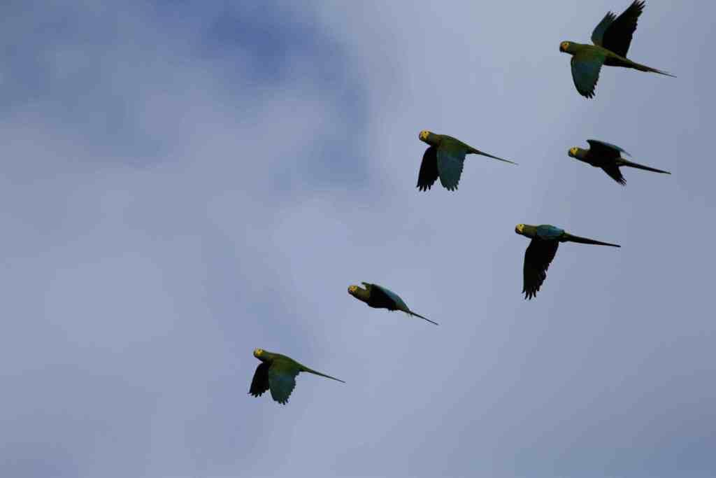 Canaima National Park